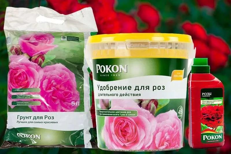 Как правильно ухаживать за розами в горшке в домашних условиях в 2019 из магазина?