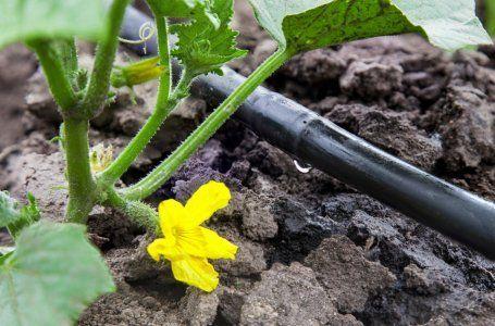 Как вырастить богатый урожай огурцов - путь от семян до сбора плодов