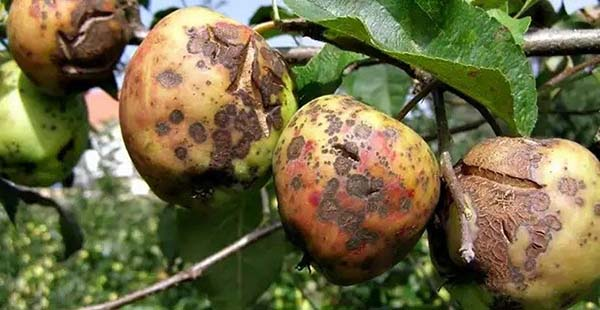 Обработка яблонь весной 2019 от болезней и вредителей: когда и чем опрыскивать, эффективные методы защиты