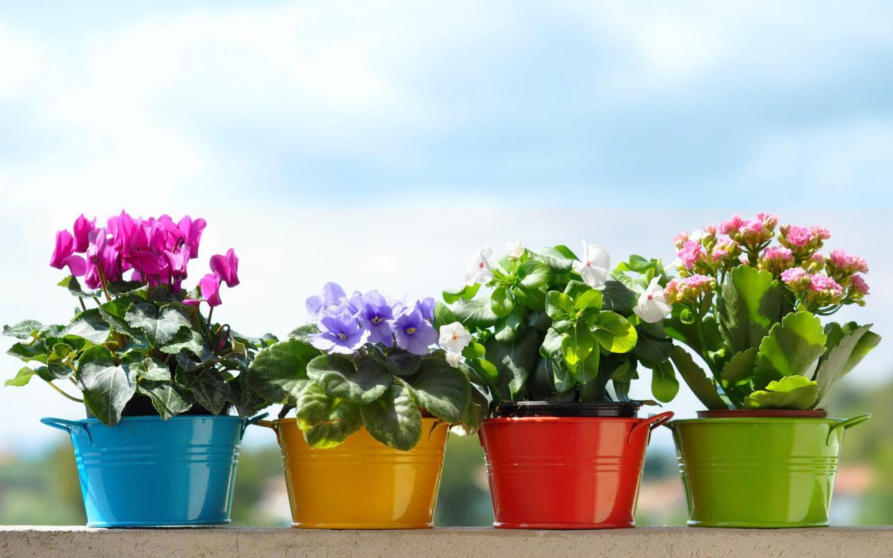 Посадка цветов и комнатных растений на рассаду в 2019 году по лунному календарю цветовода