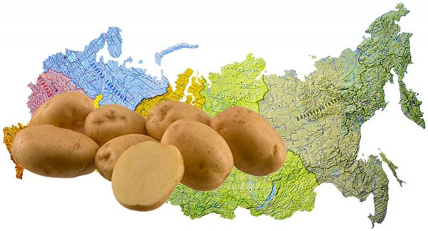 Посадка картофеля весной 2019 в открытый грунт март-апрель-май: правила и рекомендация для богатого урожая