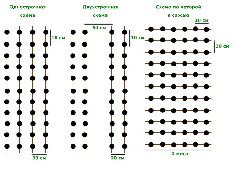 Схема посадки лука под зиму