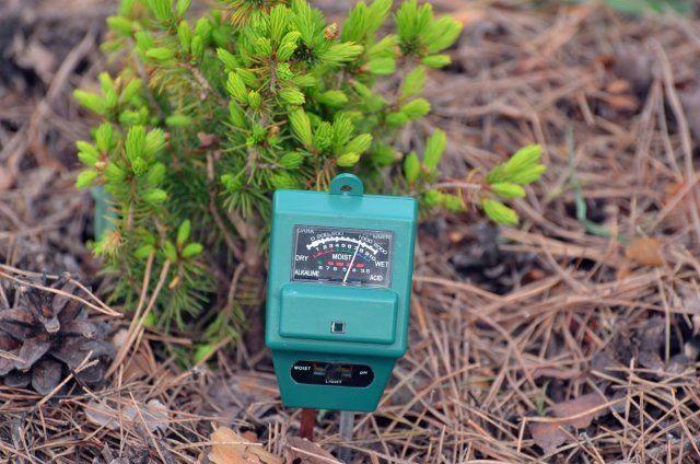 9 полезных свойств доломитовой муки, знать о которых нужно каждому огороднику