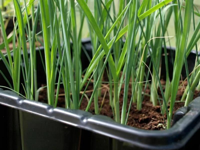 Благоприятные посадочные дни для 13 видов овощей на рассаду, лунный календарь 2019 и подробные апрельские правила посева
