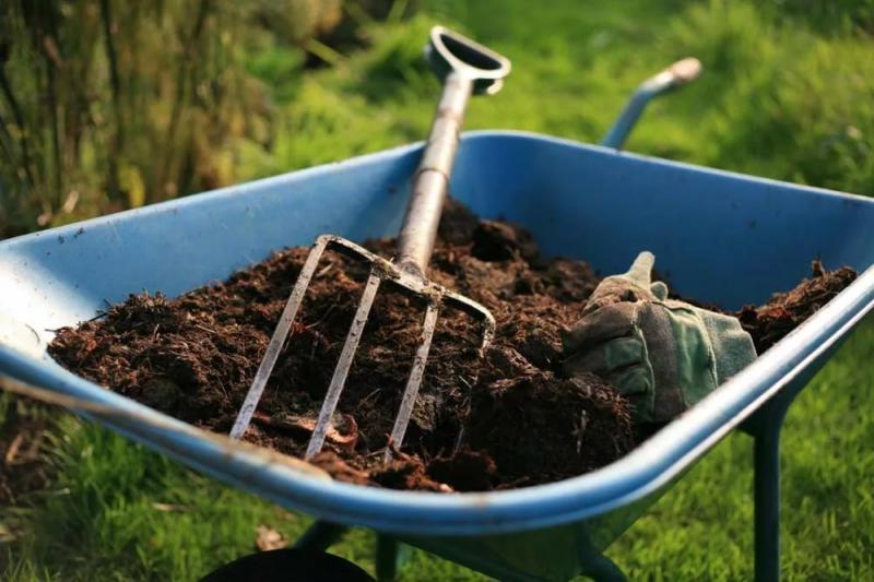 Чем подкормить чеснок весной, как это стоит делать, а какие удобрения вредны