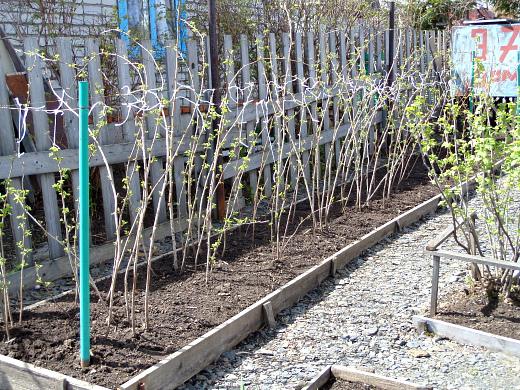 Чем подкормить малину весной: органоминеральные удобрения и их использование