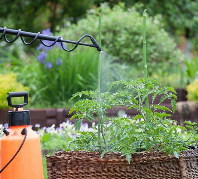 Фунгициды для растений: назначение, применение и список препаратов на которые стоит обратить внимание