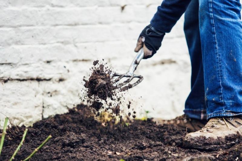 Как посадить розу? Выбираем правильное место и методику