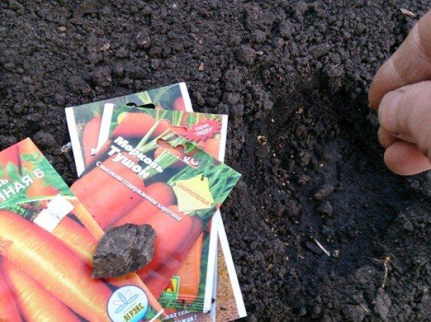 Как правильно сажать морковь – всё необходимое о подготовке почвы, семян и многом другом