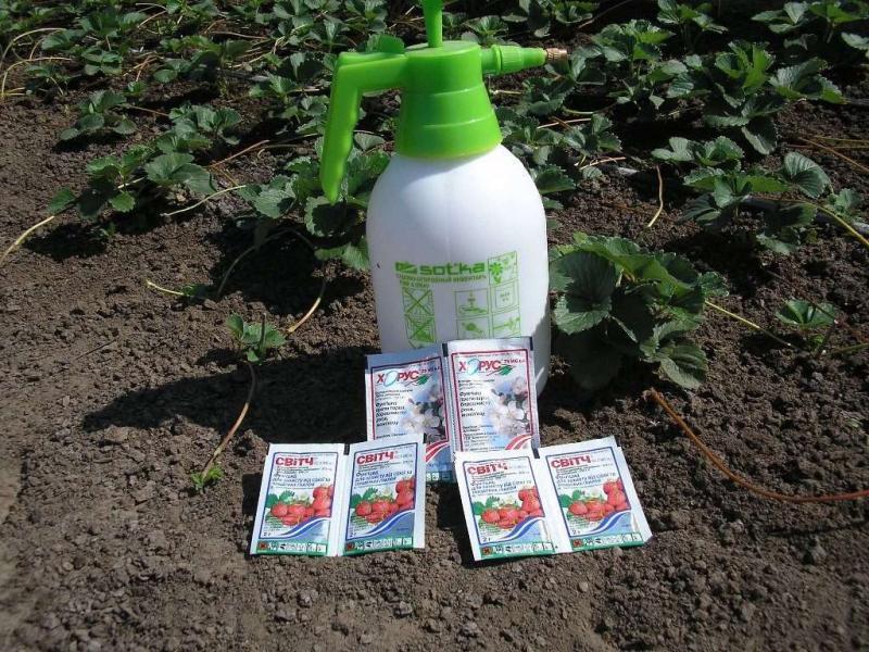Какими средствами обрабатывают клубнику - группы средств, надёжная защита ягоды