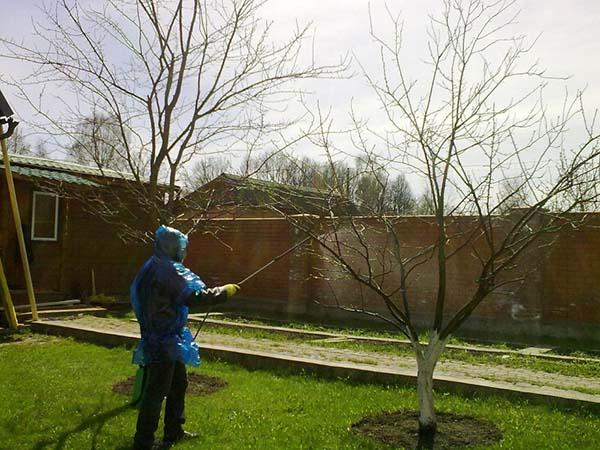 Обработка сада медным купоросом: правильное использование, сравнение эффективности фунгицидов