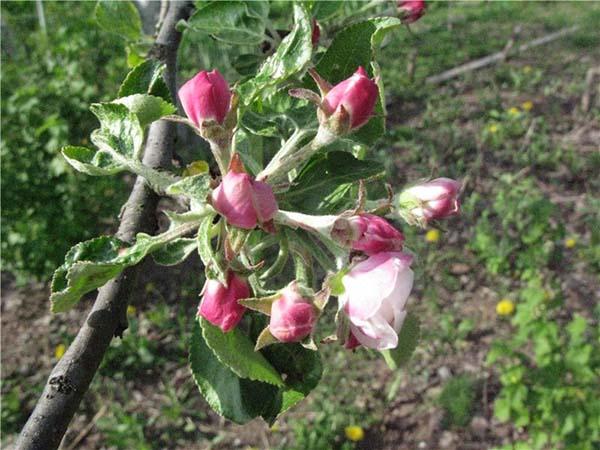 Обработка сада весной: чем защитить от болезней и вредителей деревья и кустарники