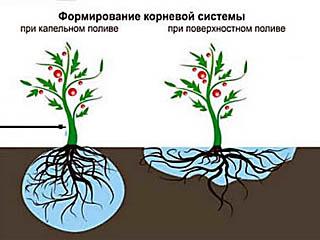 Поливаем помидоры правильно, советы бывалых садоводов и проверенные ими варианты