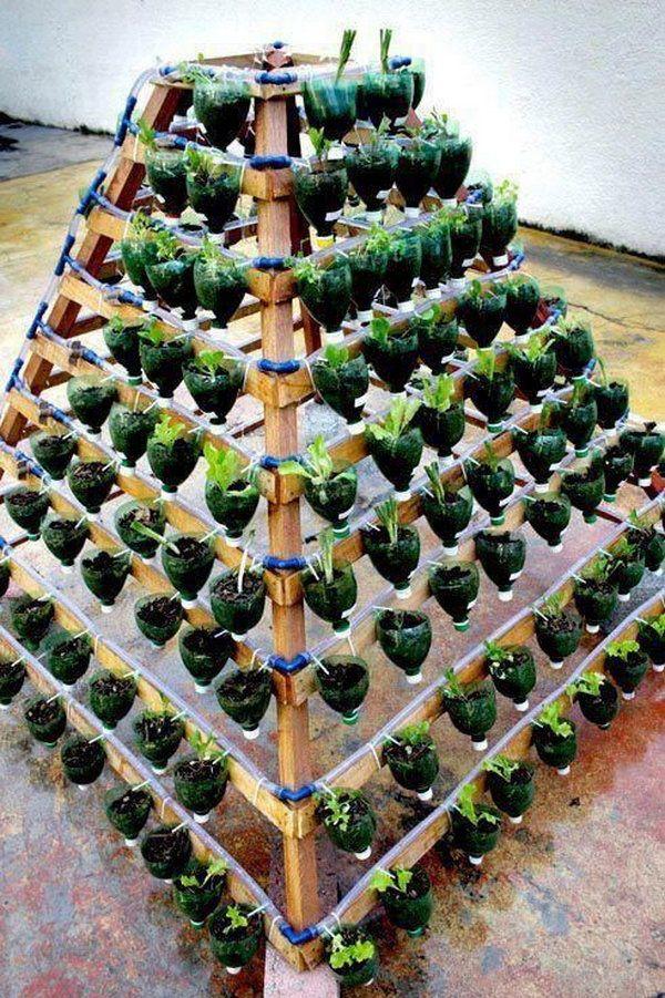 Когда сеять помидоры на рассаду: удачные дни и правила урожайного посева для всех регионов