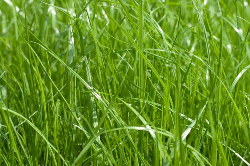 Посадка газонной травы весной: основные правила выбора, выращивания и ухода
