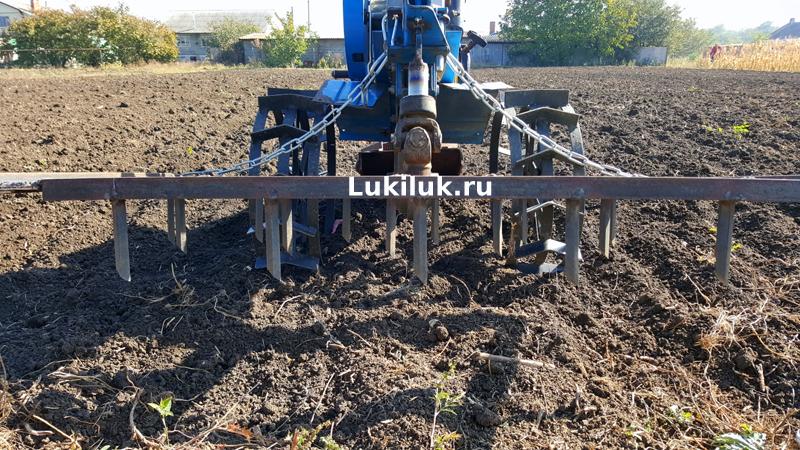 Посадка лука весной - все правила посева, которые важно знать огороднику в апреле 2019 года