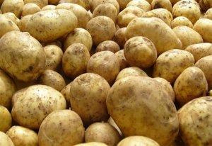 Универсальный сорт картофеля Гала: урожайность, неприхотливость, хранение, сравнительные таблицы