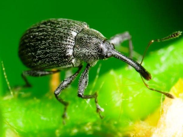 Весенняя обработка клубники: эффективная защита от вредителей и профилактика заболеваний