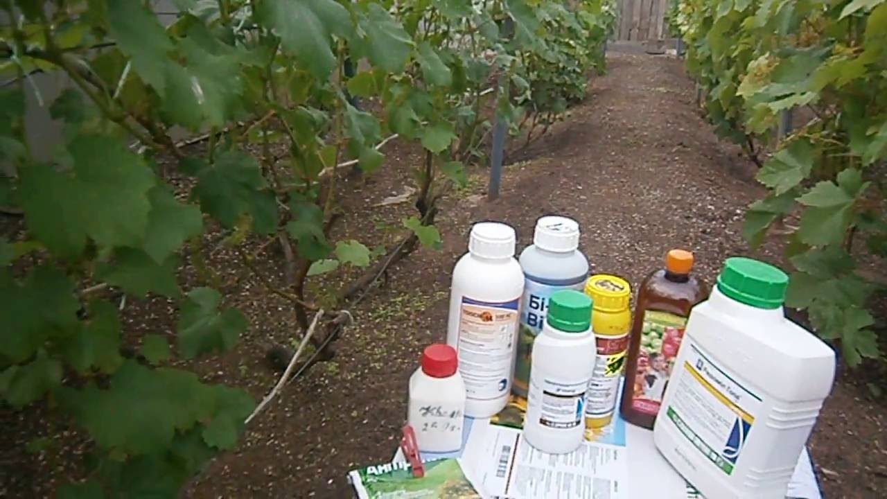 Обработка винограда до цветения какие препараты подойду