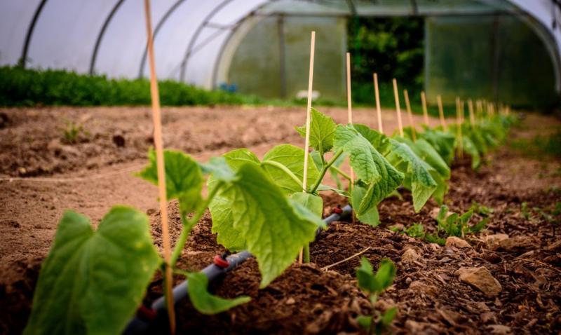 Чем поливать огурцы для хорошего урожая: народные средства, что вредит огурцам