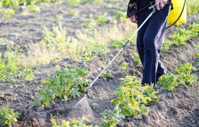 Эффективные методы и препараты для борьбы с колорадским жуком на картофеле в этом сезоне