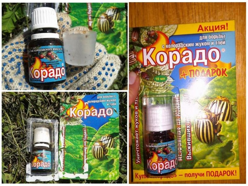 Колорадский жук: средство, борьба, эффективные народные и химические методы