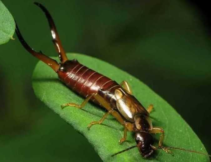 Все самые опасные вредители огорода и методы защиты посадок: подробное описание насекомых с фото и методы борьбы с ними
