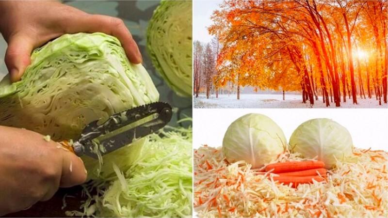 Заготовки по лунному календарю: благоприятные дни для засолки капусты в октябре
