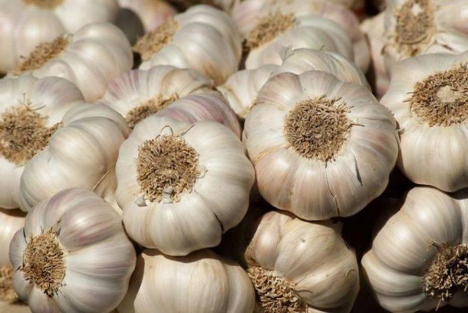 Какого числа надо сажать чеснок осенью, чтобы получить хороший урожай