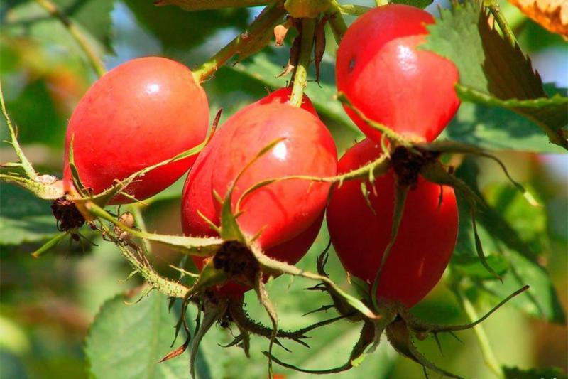 Календарь садовода: что сажать в октябре?