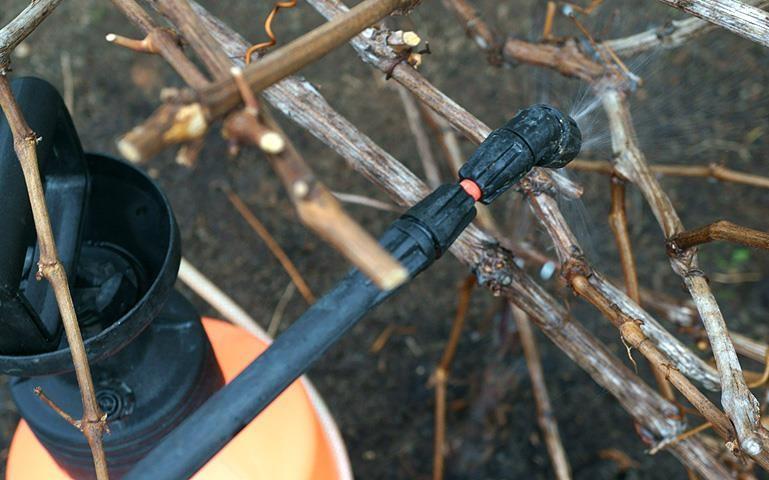 Обработка сада железным купоросом осенью, плюсы и минусы удобрения
