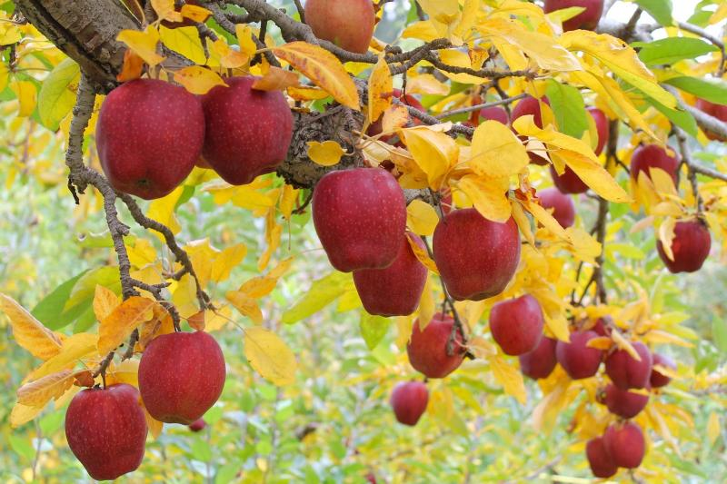 Что делать осенью в огороде