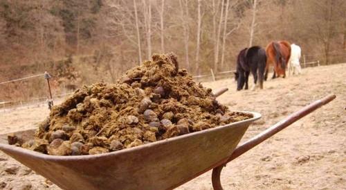Лучшее удобрение для огорода: конский и коровий навоз
