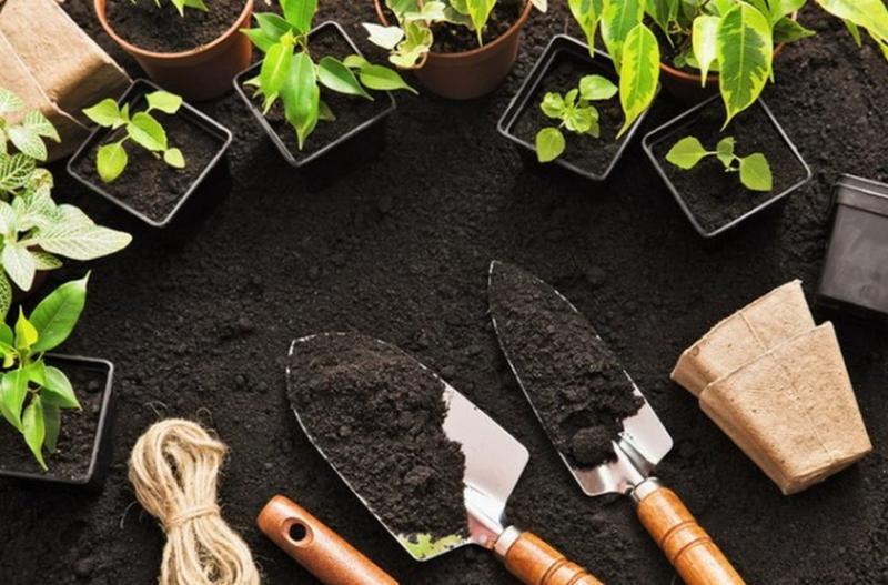 Особенности лунного календаря на декабрь 2019 года для садовода и огородника-цветовода
