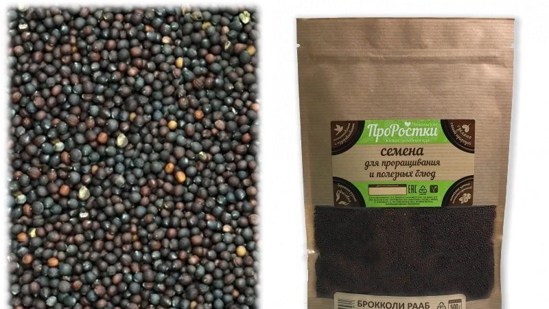 Польза ростков брокколи и способы проращивания семян