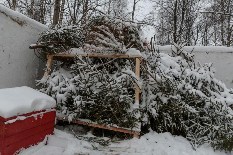Куда сдать елку после Нового года в Москве